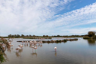 Photograph - Lake With Flamingos by Pietro Ebner