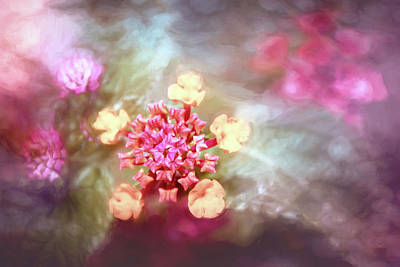Royalty-Free and Rights-Managed Images - Lantana Camara Pastel Pinks  by Carol Japp