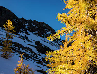 Royalty-Free and Rights-Managed Images - Larches 5 by Pelo Blanco Photo