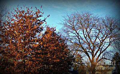 Frank J Casella Royalty-Free and Rights-Managed Images - Late Autumn Golden Hour by Frank J Casella