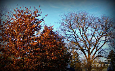 Frank J Casella Royalty-Free and Rights-Managed Images - Late Autumn Golden Hour - Soft by Frank J Casella