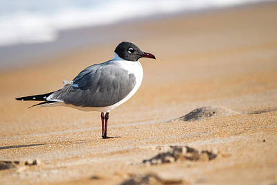 Pediatricians Office Rights Managed Images - Laughing Gull Royalty-Free Image by Mary Ann Artz