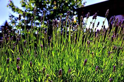 Jerry Sodorff Royalty-Free and Rights-Managed Images - Lavendar Gazebo by Jerry Sodorff