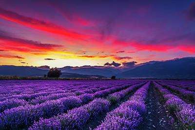 Landscapes Royalty-Free and Rights-Managed Images - Lavender Season by Evgeni Dinev