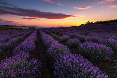 Everett Collection - Lavender Sky by Evgeni Dinev