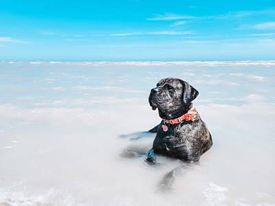 Claude Monet - Lazy Days - Daisy the Cane Corso at the Beach by Bonny Puckett