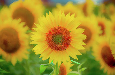 Mellow Yellow Rights Managed Images - Leader of the Band Royalty-Free Image by Marcy Wielfaert