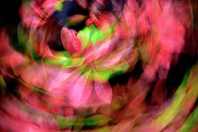 Jerry Sodorff Royalty-Free and Rights-Managed Images - Leaf Circus ICM by Jerry Sodorff