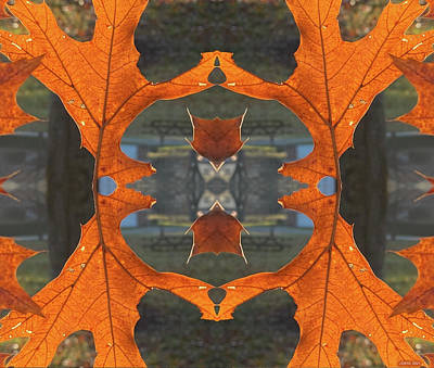 Royalty-Free and Rights-Managed Images - Leaf Fox by Greg Joens