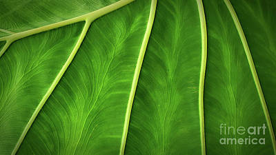 Pittsburgh According To Ron Magnes - Elephant Ear Leaf in Macro by Mike Nellums