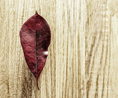 Photograph - Leaf on a wood background by Jim Orr