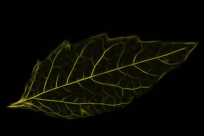 Crystal Wightman Royalty Free Images - Leaf Wire Royalty-Free Image by Crystal Wightman