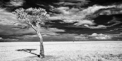 All American - Leaning tree on the plains - infrared by Murray Rudd
