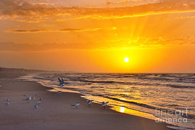 Queen - Least Terns at Sunrise on the Beach by Catherine Sherman
