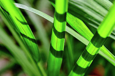New Years - Leaves of Grass by Jeffrey Katz