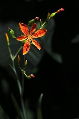 Classic Golf - Leopard Flower by Carol Montoya