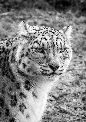 Royalty-Free and Rights-Managed Images - Leopard on Green Grass by Celestial Images