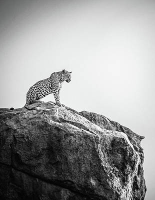 Royalty-Free and Rights-Managed Images - Leopard On Mountain by Celestial Images