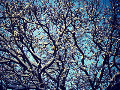 Frank J Casella Royalty-Free and Rights-Managed Images - Light and Shadow Snowy Branches by Frank J Casella