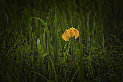 Just Desserts Rights Managed Images - Light in reeds #l1 Royalty-Free Image by Leif Sohlman