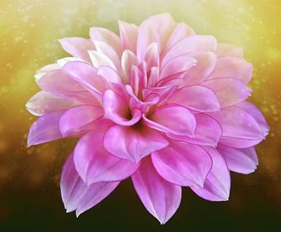 Grateful Dead - Light Pink Dahlia With Magical Golden Dust by Johanna Hurmerinta