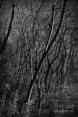 Frank J Casella Royalty-Free and Rights-Managed Images - Light Through Trees - Monochrome by Frank J Casella