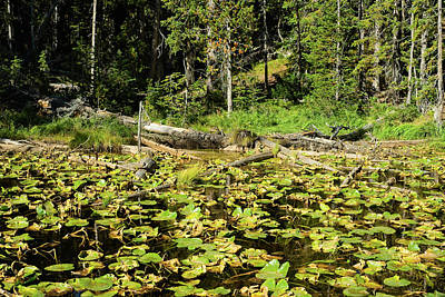 Up Up And Away - Lily pad lake by Kenneth Sponsler