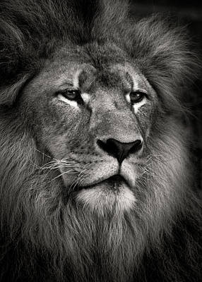 Animals Photos - Lion by Dave Bowman