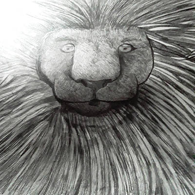 Animals Drawings - Lion in Pencil by Just Jo
