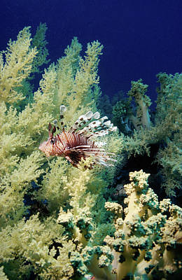 Scifi Portrait Collection - Lionfish With Soft Coral by Youri Mahieu