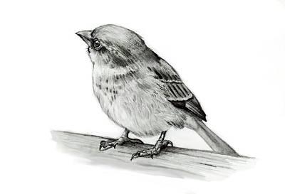 Animals Drawings - Little Bird in Pencil by Joyce Geleynse