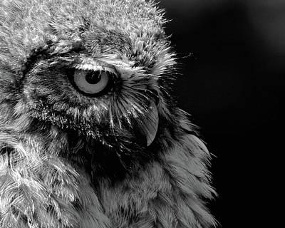 Unicorn Dust - Little Owl in Mono  by Neil R Finlay