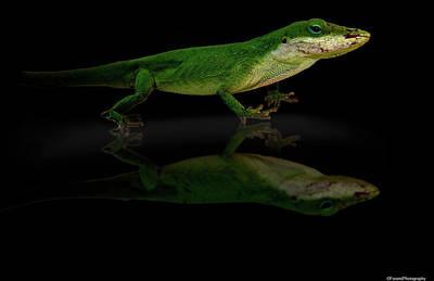 Lovely Lavender - Lizard Pose by Debra Forand