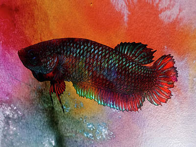 Pop Art - Lockdown Betta #43 by Betta Painter