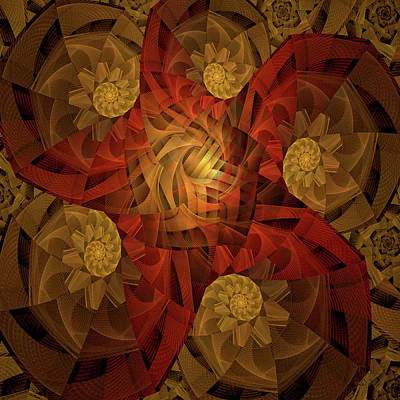 Jodi Diliberto Royalty-Free and Rights-Managed Images - Logarithmic Spirals and a Sea Star by Jodi DiLiberto