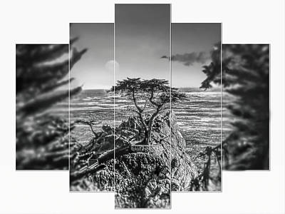 Bringing The Outdoors In - Lone Cypress by Christina Ford