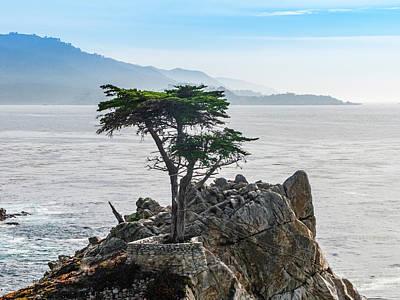 Pop Art - Lone Cypress Tree by Sean O