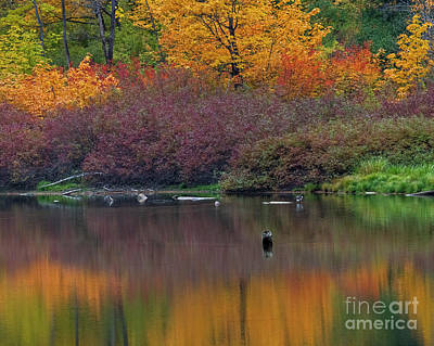 Af Vogue - Lone Goose Autumn by Mike Dawson