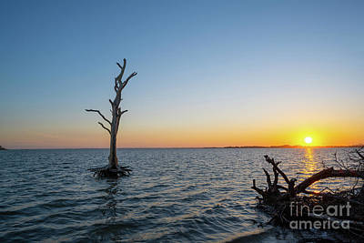 Vintage Movie Stars Royalty Free Images - Lone Tree Sunset At Assateague Island  Royalty-Free Image by Michael Ver Sprill