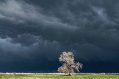 Royalty-Free and Rights-Managed Images - Lone Tree Tornado Warning by Darren White