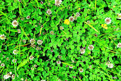 Royalty-Free and Rights-Managed Images - Looking For An Irish Four Leaf Clover by Patrick J Murphy