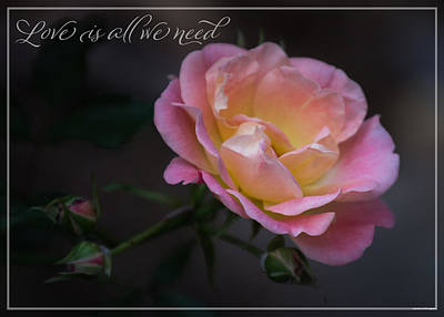 Photograph - Love is all we need by Judy Garrard