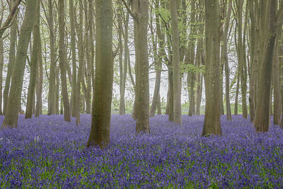 Pasta Al Dente - Lovely soft Spring light in bluebell woodland with vibrant color by Matthew Gibson