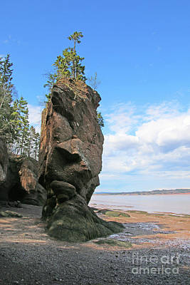 Boho Christmas - Low Tide at Hopewell Rocks Bay of Fundy NB  5445 by Jack Schultz