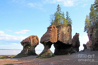 Boho Christmas - Low Tide at Hopewell Rocks Bay of Fundy NB  5454 by Jack Schultz