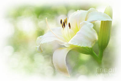 Vintage Pharmacy - Luminous Daylily by Anita Pollak