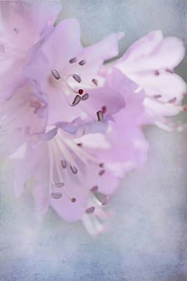 Angels And Cherubs - Luminous Pink Azalea Flowers by Jennie Marie Schell