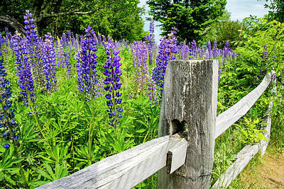 Keith Richards - Lupine Borders by Greg Fortier