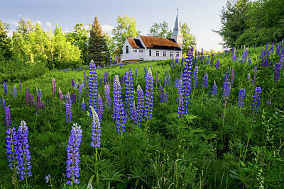 David Bowie Royalty Free Images - Lupines by Saint Matthews Chapel in Sugar Hill, New Hampshire I Royalty-Free Image by William Dickman