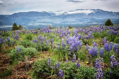 Safari - Lupins on South Steens Mountain by Belinda Greb